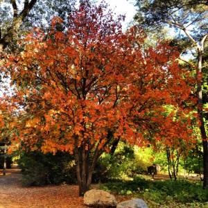Saskatoon Forestry Farm shines in the fall