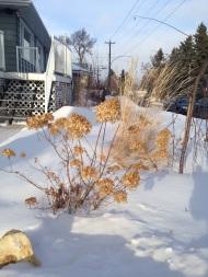 Beauty in a winter walk