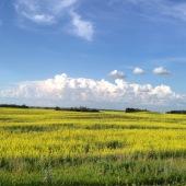 spring-summer-2015-523