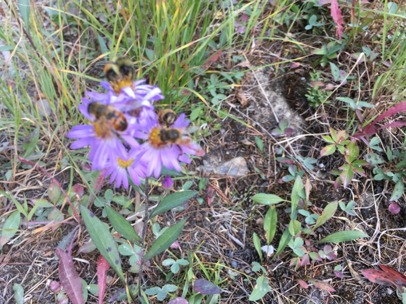 Tiny flowers and tons of bees